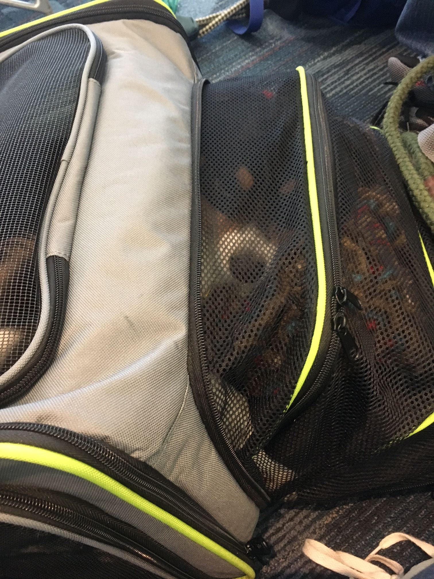 PCS-with-dogs-carry-on-carriers-schuyler-croy-2.JPG