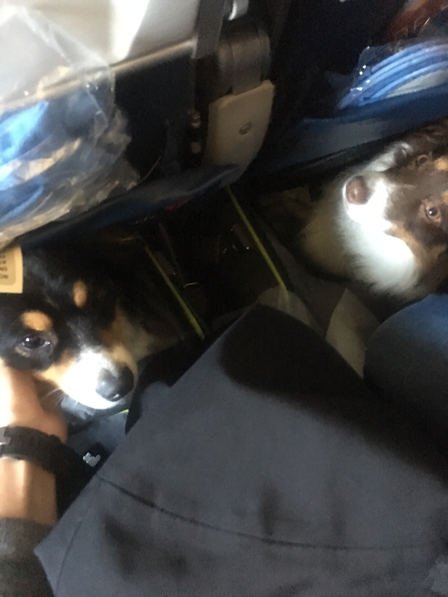 PCS-with-dogs-carry-on-carriers-schuyler-croy-4.JPG