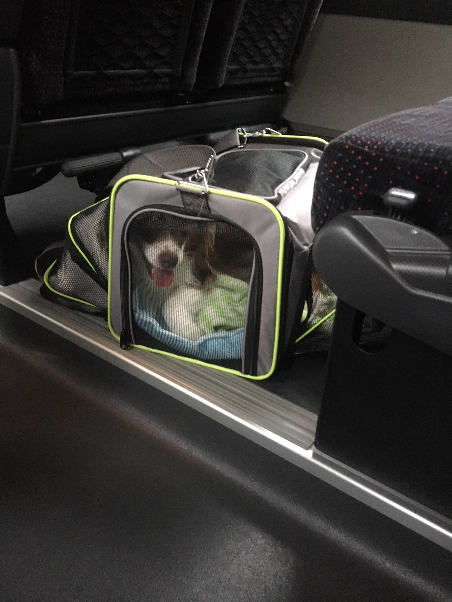 Maverick in his pet carrier on the bus to the airport
