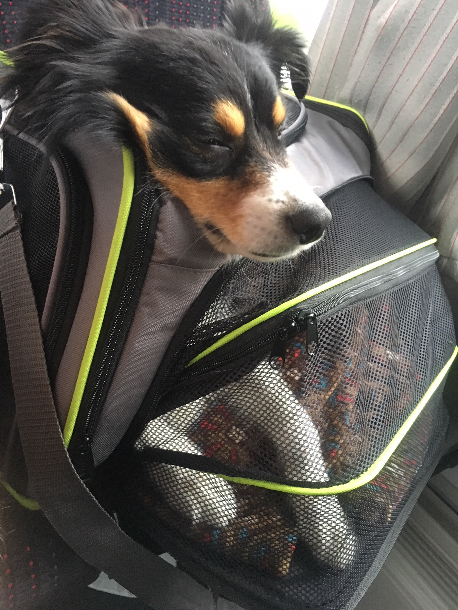 Monroe in his pet carrier on the bus to the airport