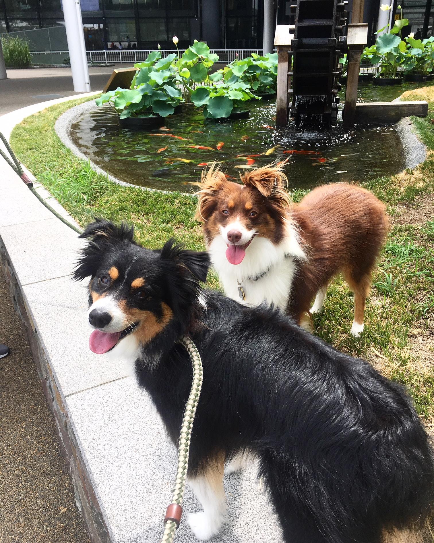 Pet travel in Japan Monroe Tales Schuyler Croy