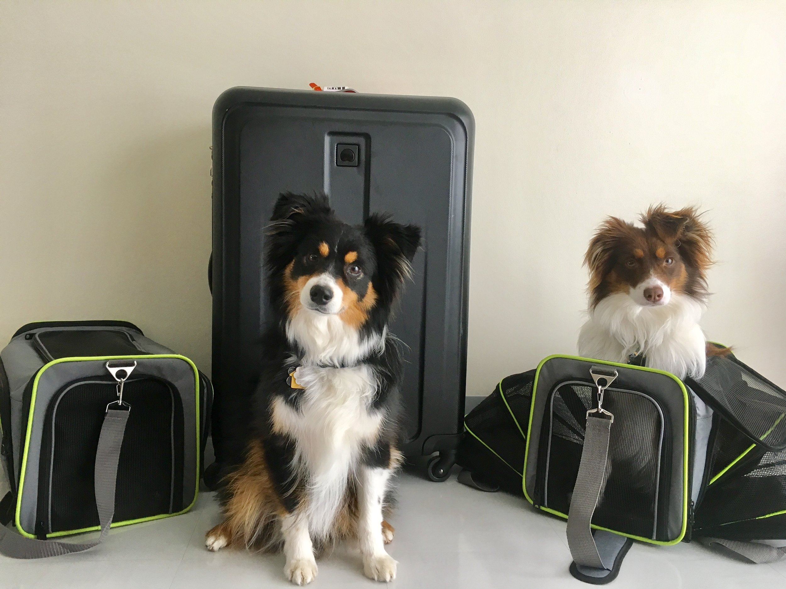 Discover with Dogs recommended carry on pet carriers for flights on an airplane