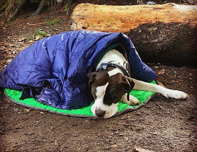 The perfect camping dog! Who has camped with their pup? 📷: @rileytheadventurepup