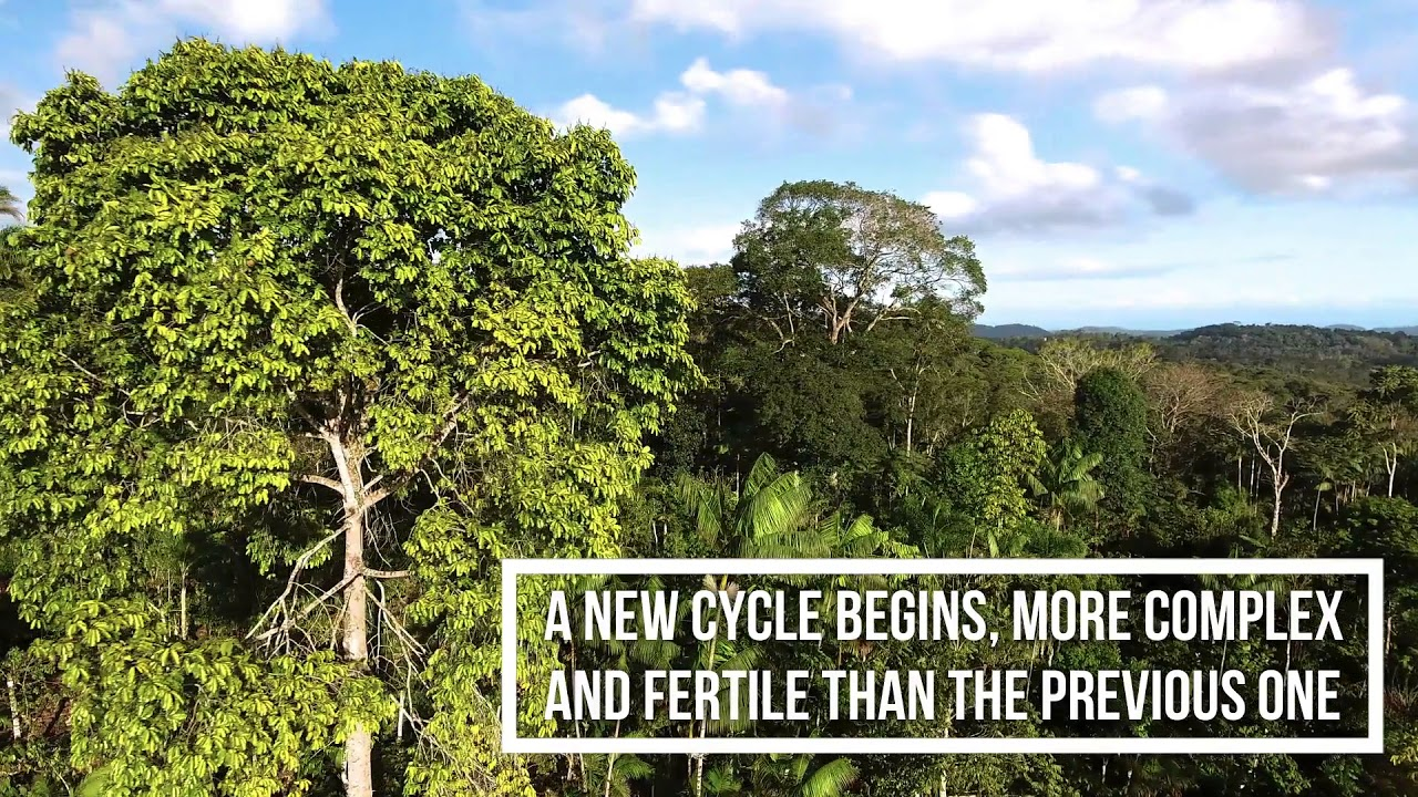 Life in syntropy - A beautiful regeneration project in Brazil is coming to La Junquera! Learn more about syntropic farming on friday afternoon.