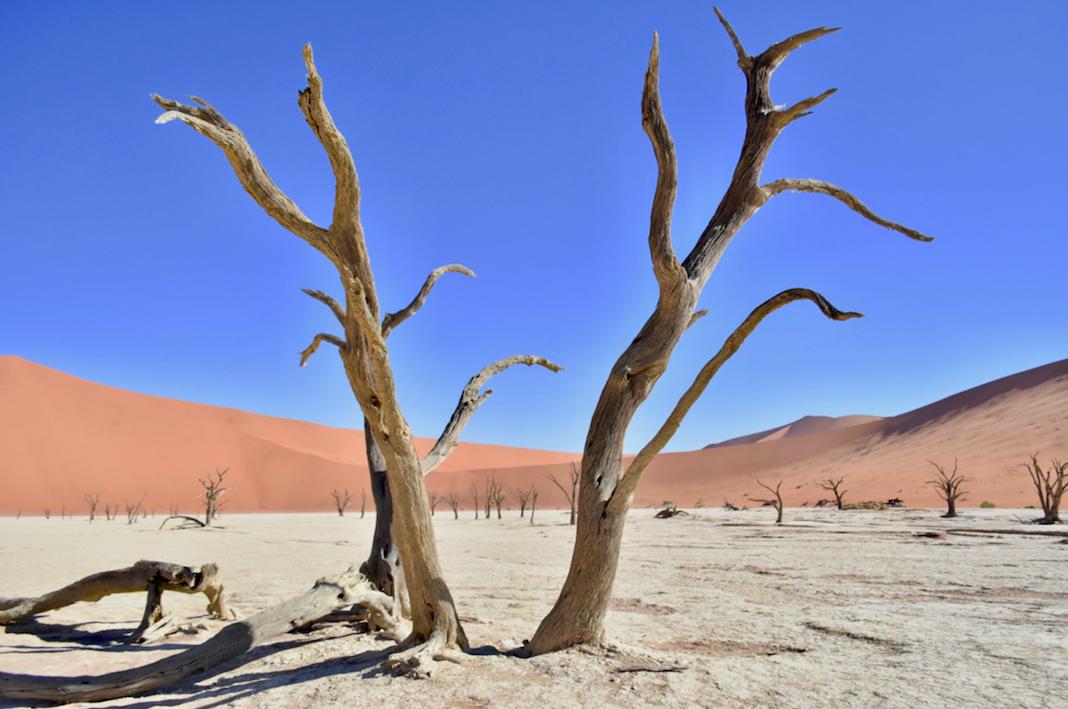 Sossusvlei petrified trees, Namibia