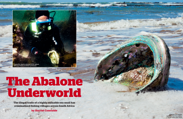The Abalone Underworld - Geographical Magazine, December 2018