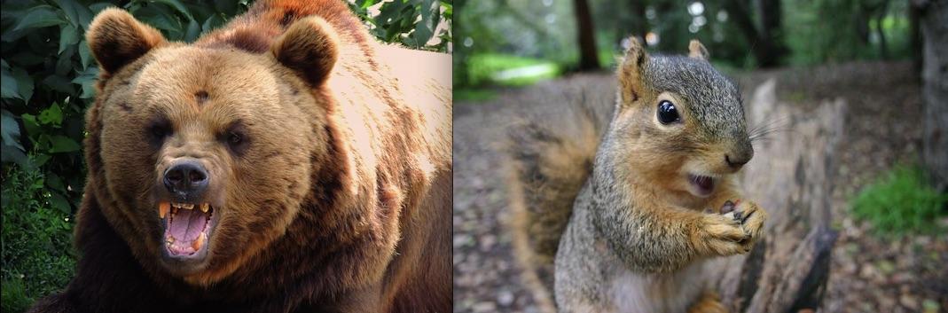 bear-squirrel.jpg
