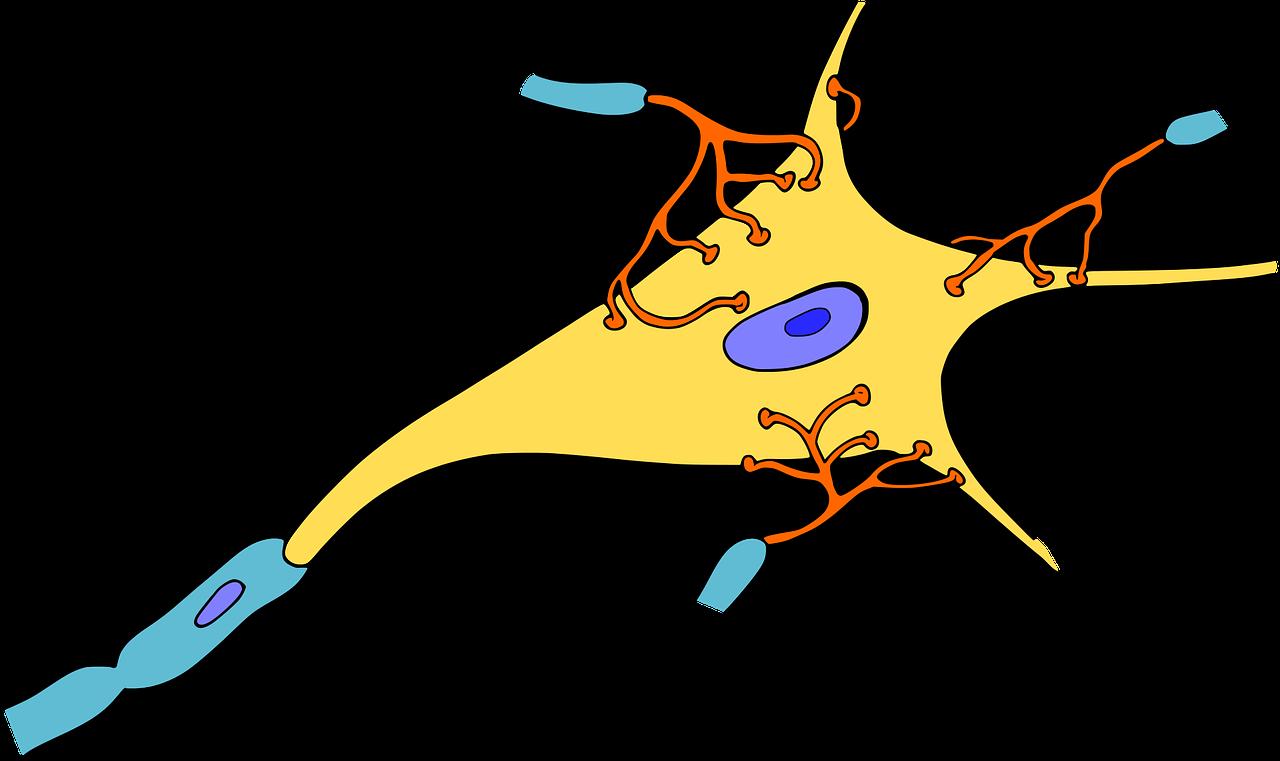 biology-1295127_1280.png