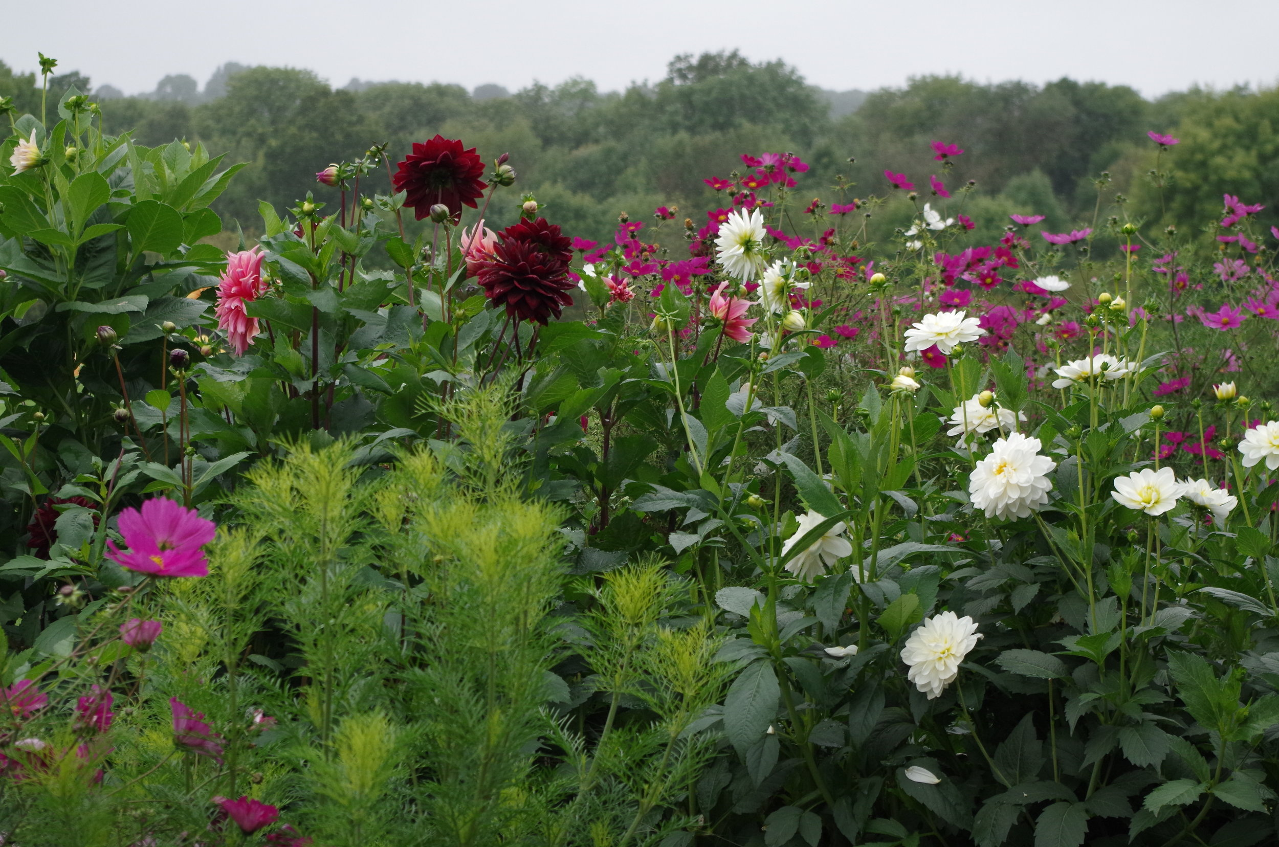 A VARIETY OF MIXED FLOWERS