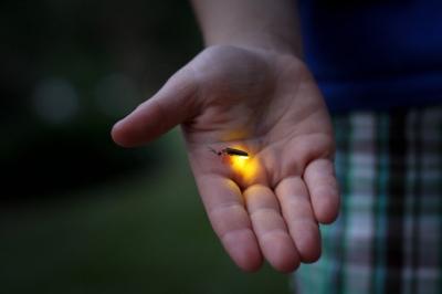 firefly-by-jessica-lucia-cc.jpg