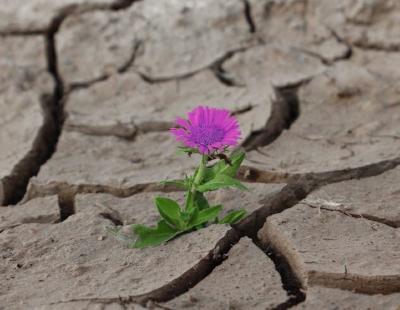 flower purple.jpg