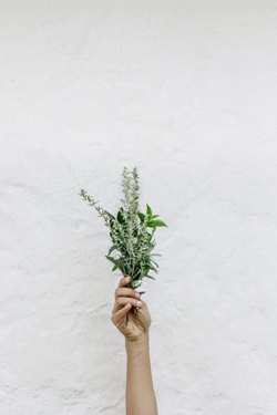 herbs for mood.jpg