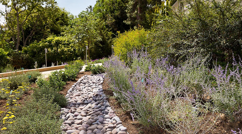 UCLA Mildred E. Mathias Botanical Garden