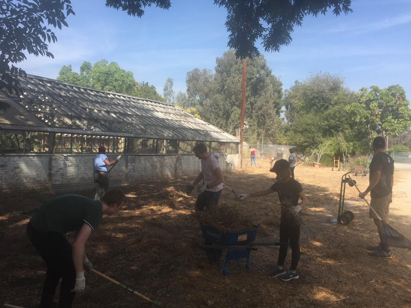UCLA-INFEWS trainees work together to clear the garden space.