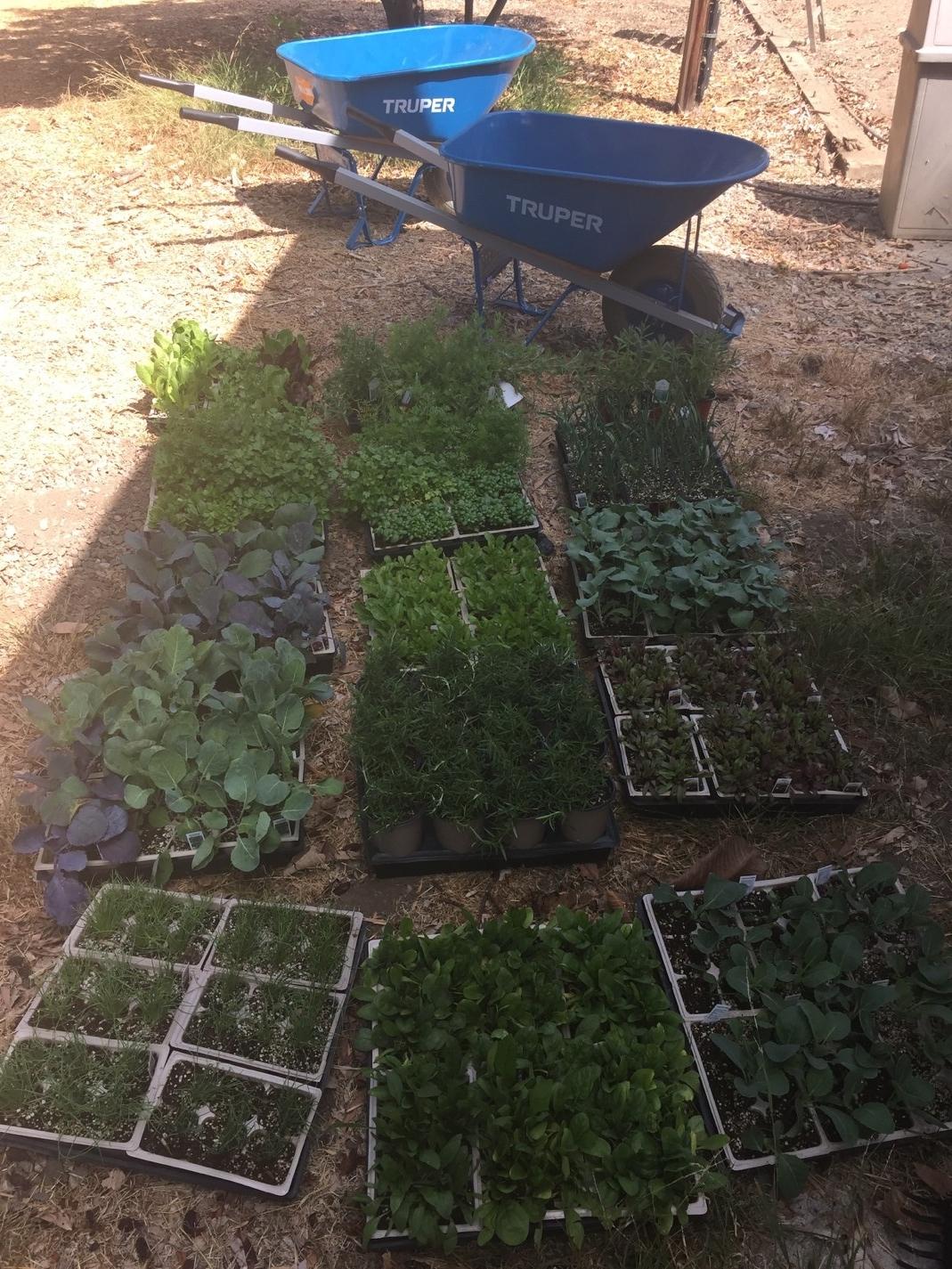 Vegetation prepped for planting in the garden beds.
