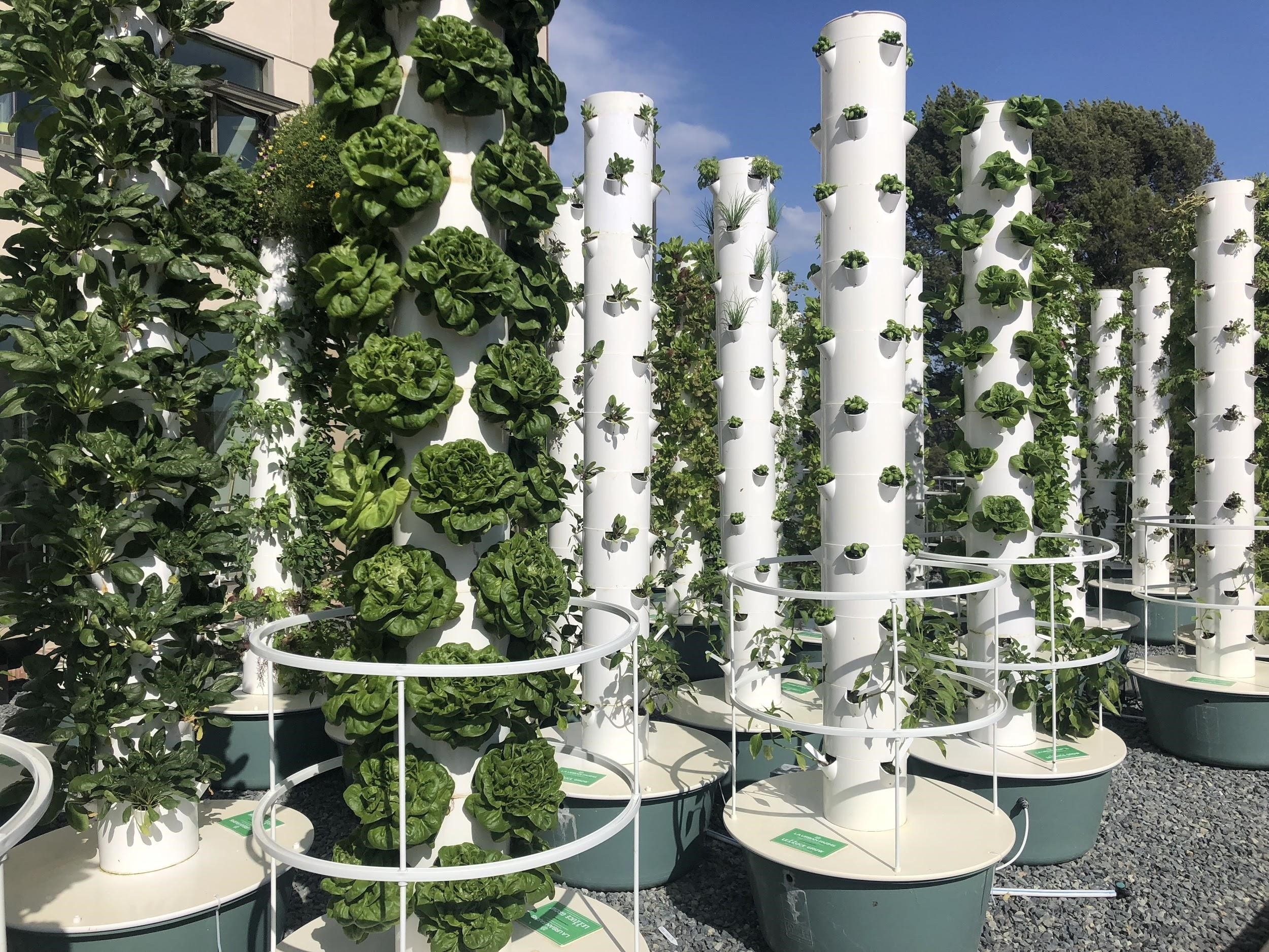 Innovative tower gardens located near the UCLA dormitories to demonstrate an approach towards urban farming.