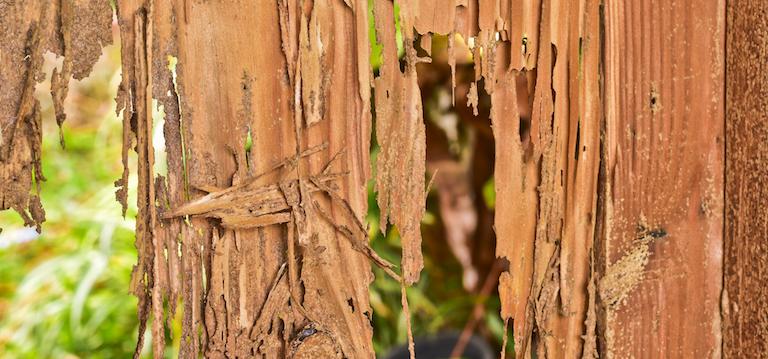 Termite Damage 1.jpg