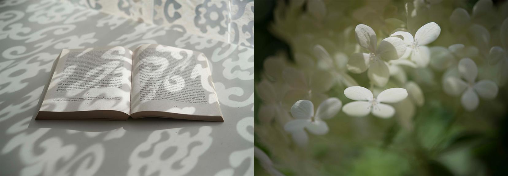 Openbook-Butterfly.jpg
