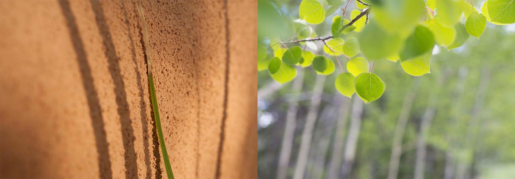 Shadow-Glowing Leaf (1).jpg