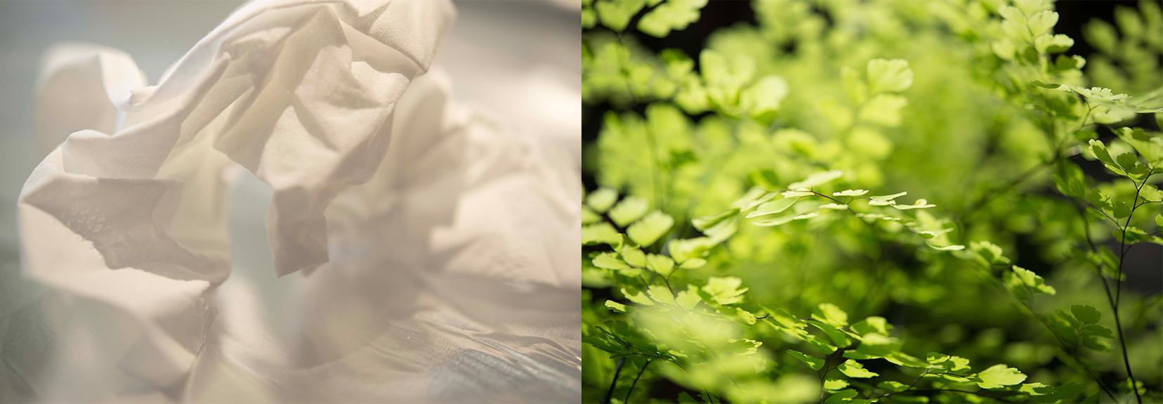 Tissue-Greenery.jpg