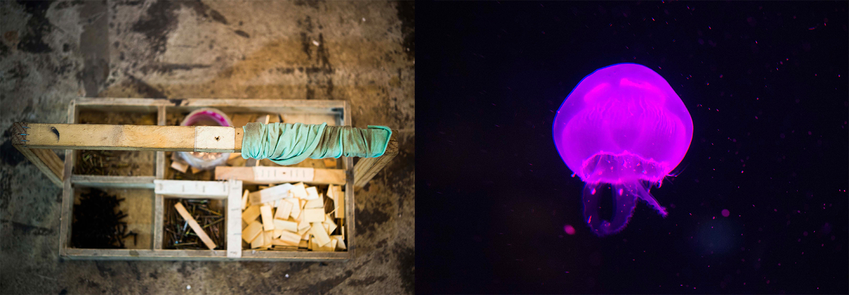 Tool Box- Purple Jellyfish.jpg
