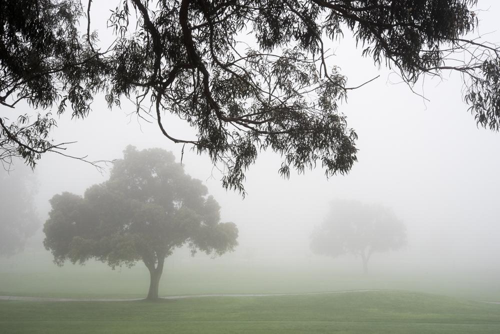 2trees and fog Landscape  Michal Greenboim.jpg
