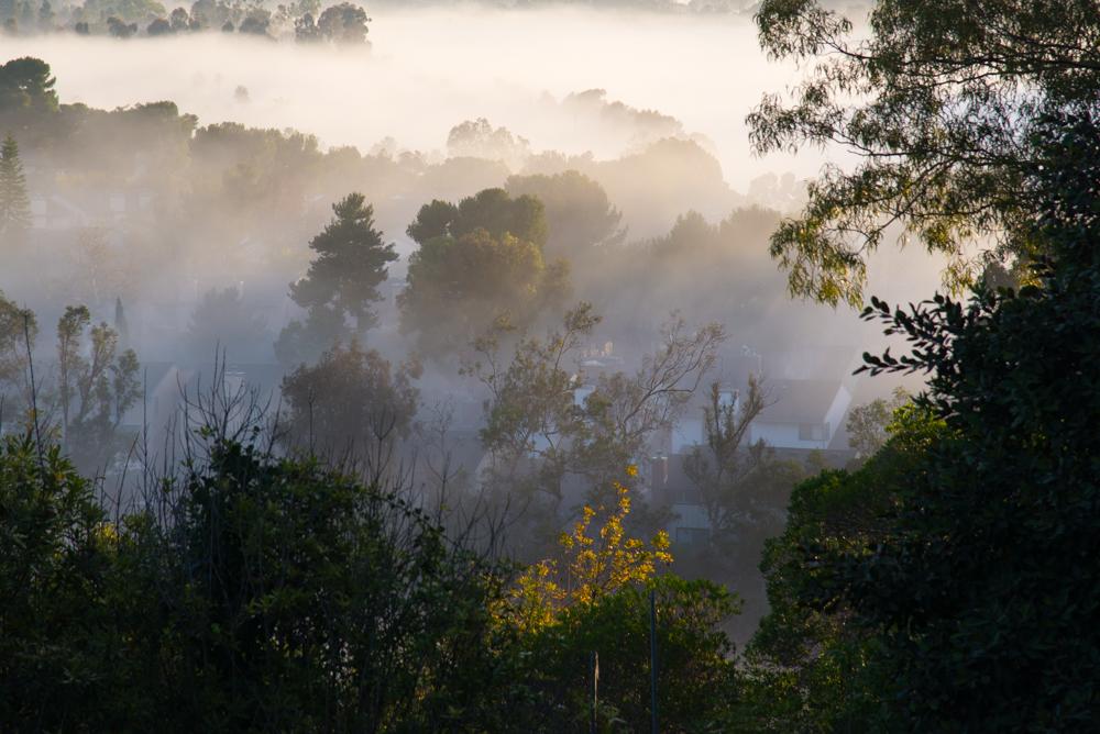 1trees and fog Landscape  Michal Greenboim.jpg