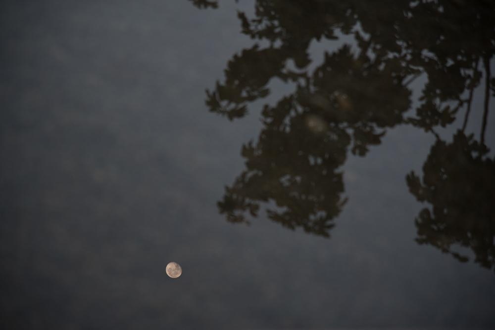 6trees and fog Landscape  Michal Greenboim.jpg