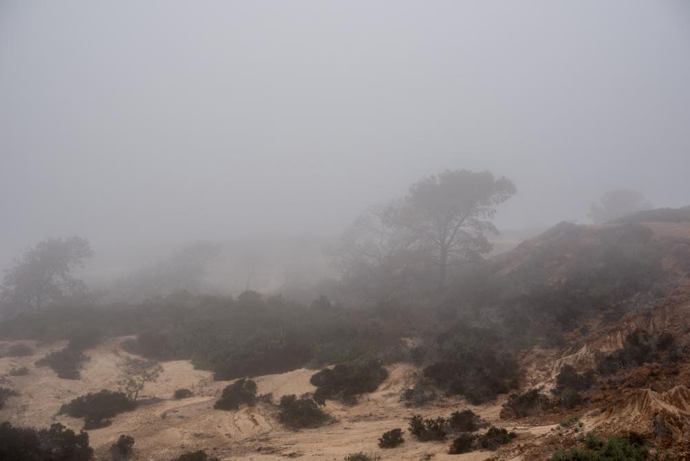 8trees and fog Landscape  Michal Greenboim.jpg
