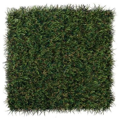 FL sportsgrass-max-patch.jpg
