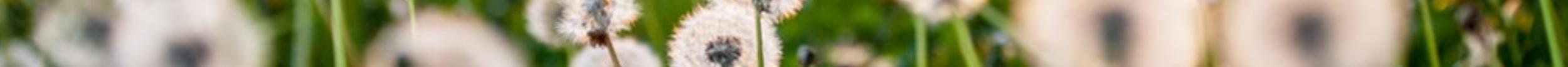 dandelion footer 2.png