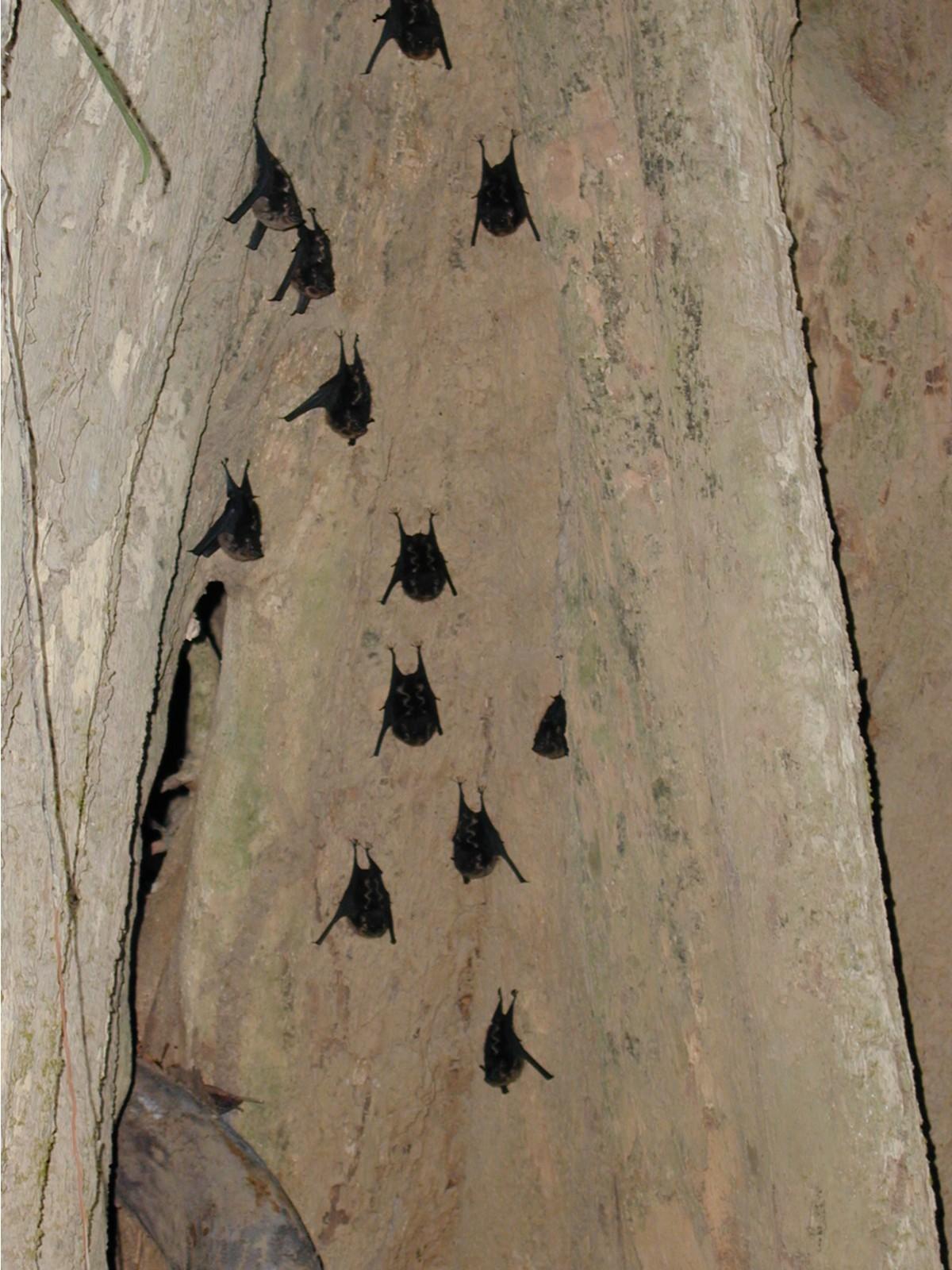 River Bats.JPG