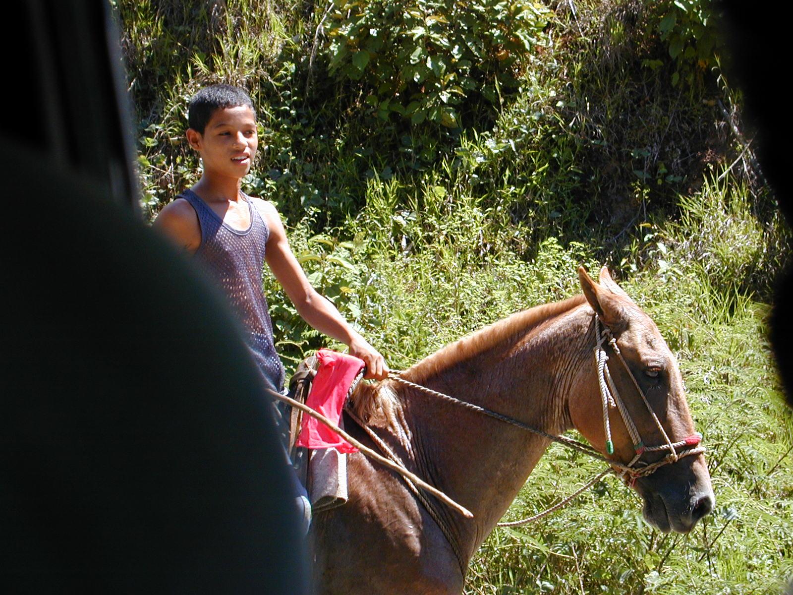 Road Horse.JPG