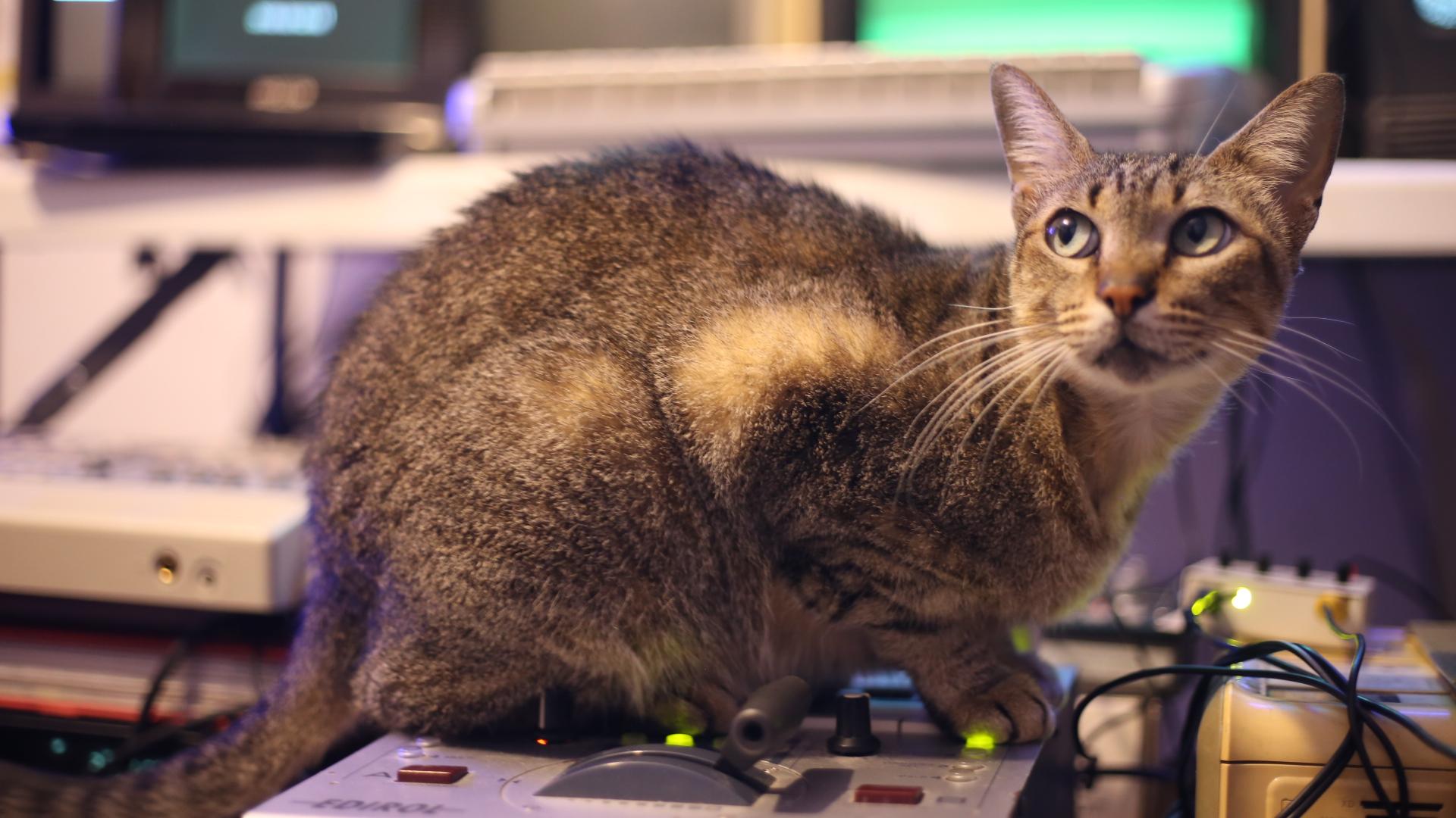 O gato Benjamin tem sua ilustre participação no live do Supernatural. Ele contribui com mais camadas de respostas de frequências nos televisores e sons.