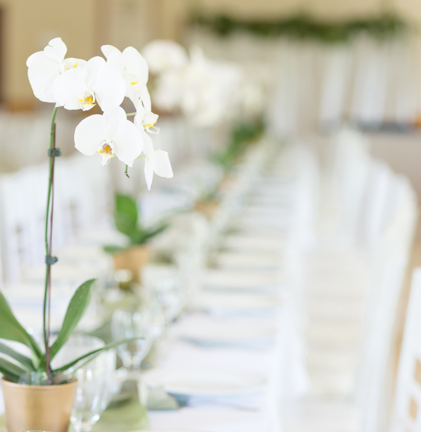 wedding-table-arrangement-orchid-potted.jpg