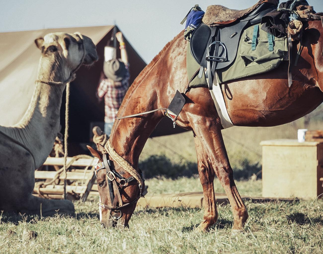 NOMAD HORSE & CAMEL