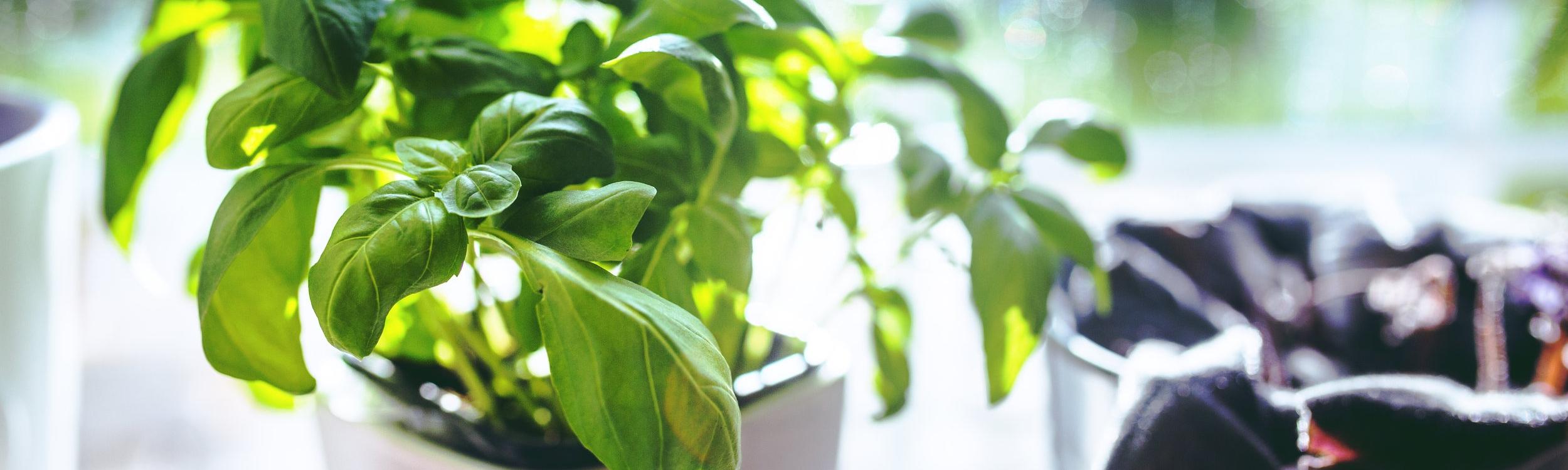 cup-leaf-spring-leaves.jpg