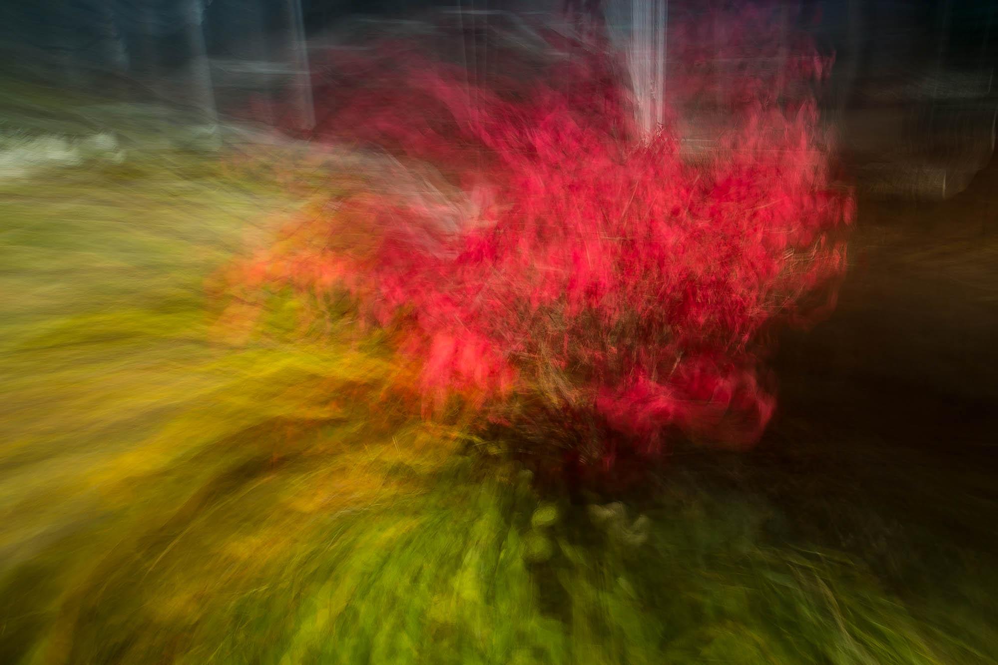Burning Bush- Jordan-11-2015-1N6A5447.jpg