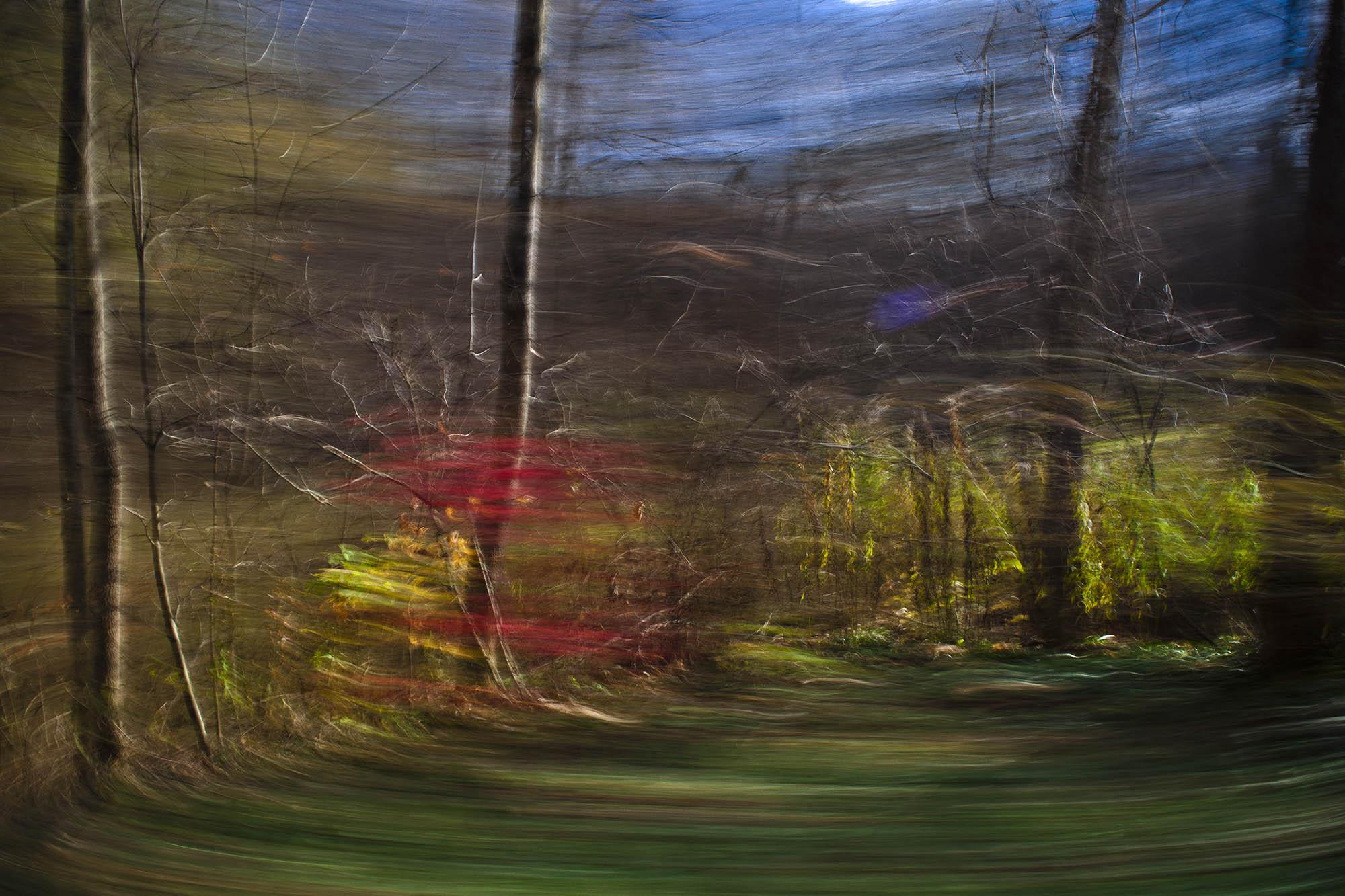 burning bush-0389.jpg