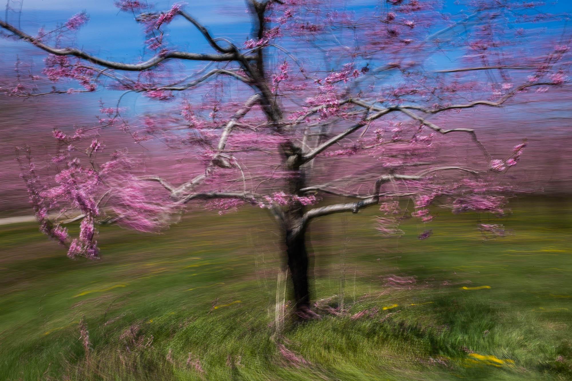 Cherry Orchard #1 - Jordan -05-2016-1N6A0036.jpg