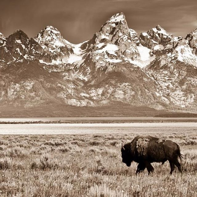 WYO |Friday beauty |JH never disappoints 💫 PC Gary Crandall @graycranestudios  #jacksonhole #buffalo #tetons #fridayvibes #jhdreaming #stylingthenewwest #buffalostyle #tsgjacksonhole #mountainstyle #gtnp #outwest #thatswy