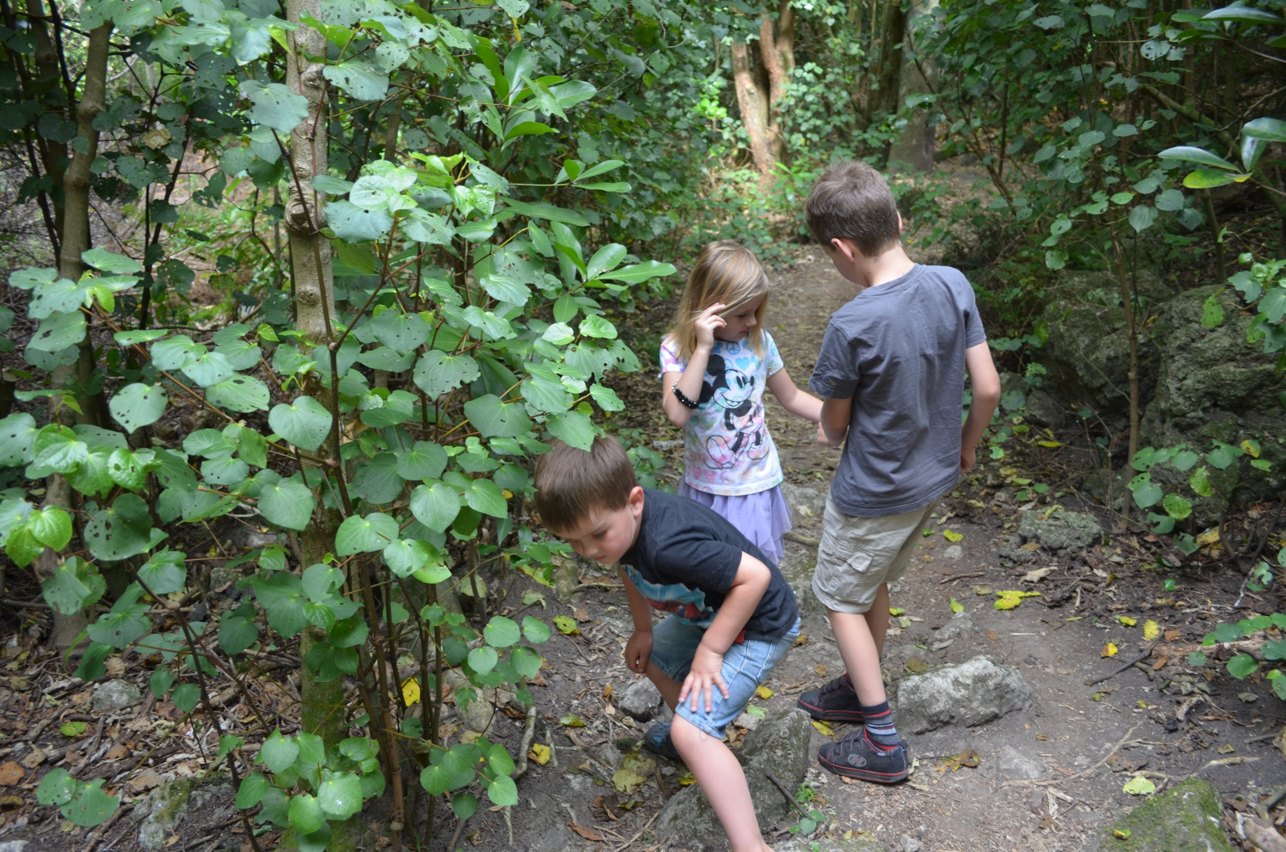 Looking for bugs in the ngahere.