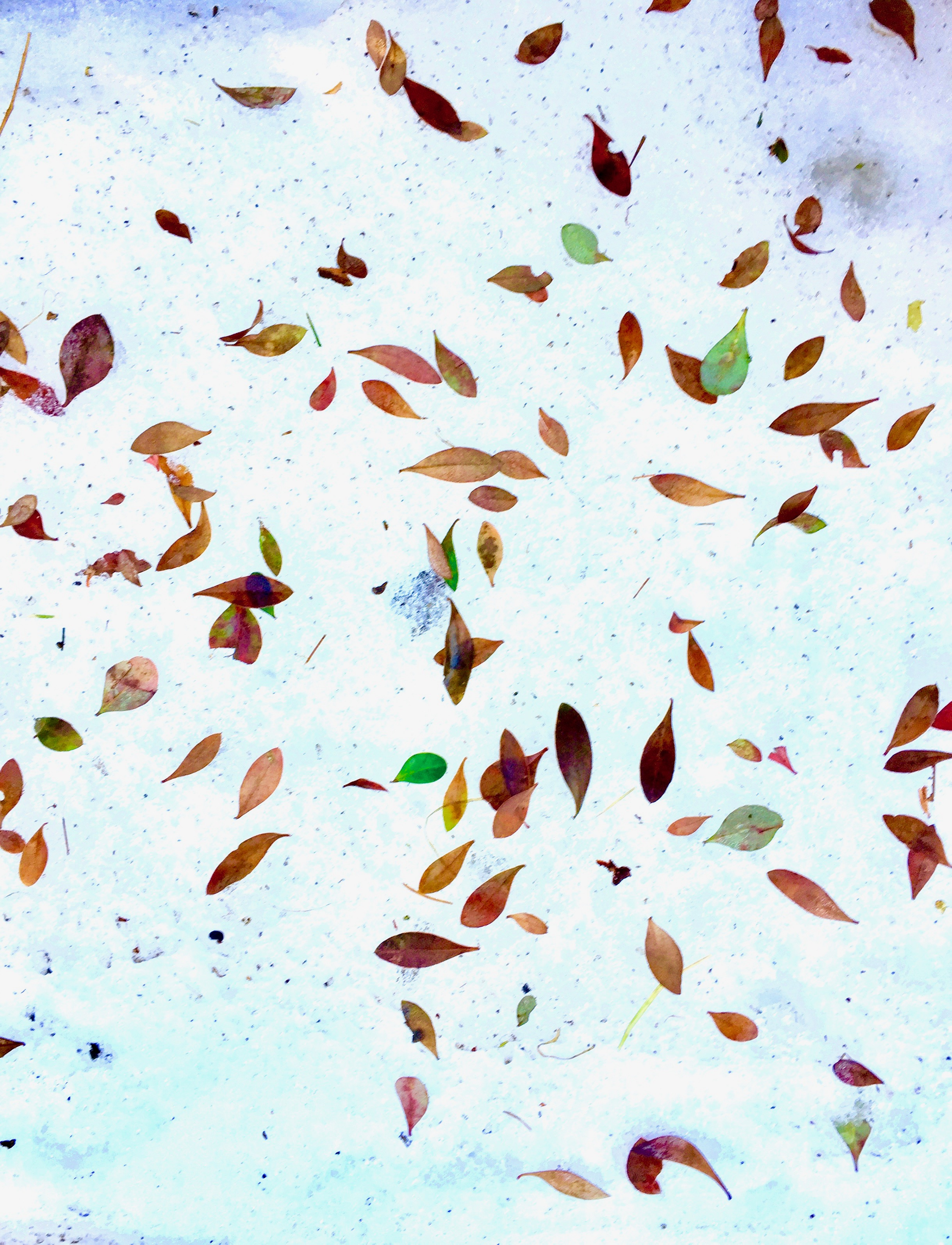 leaves_snow_color.jpg