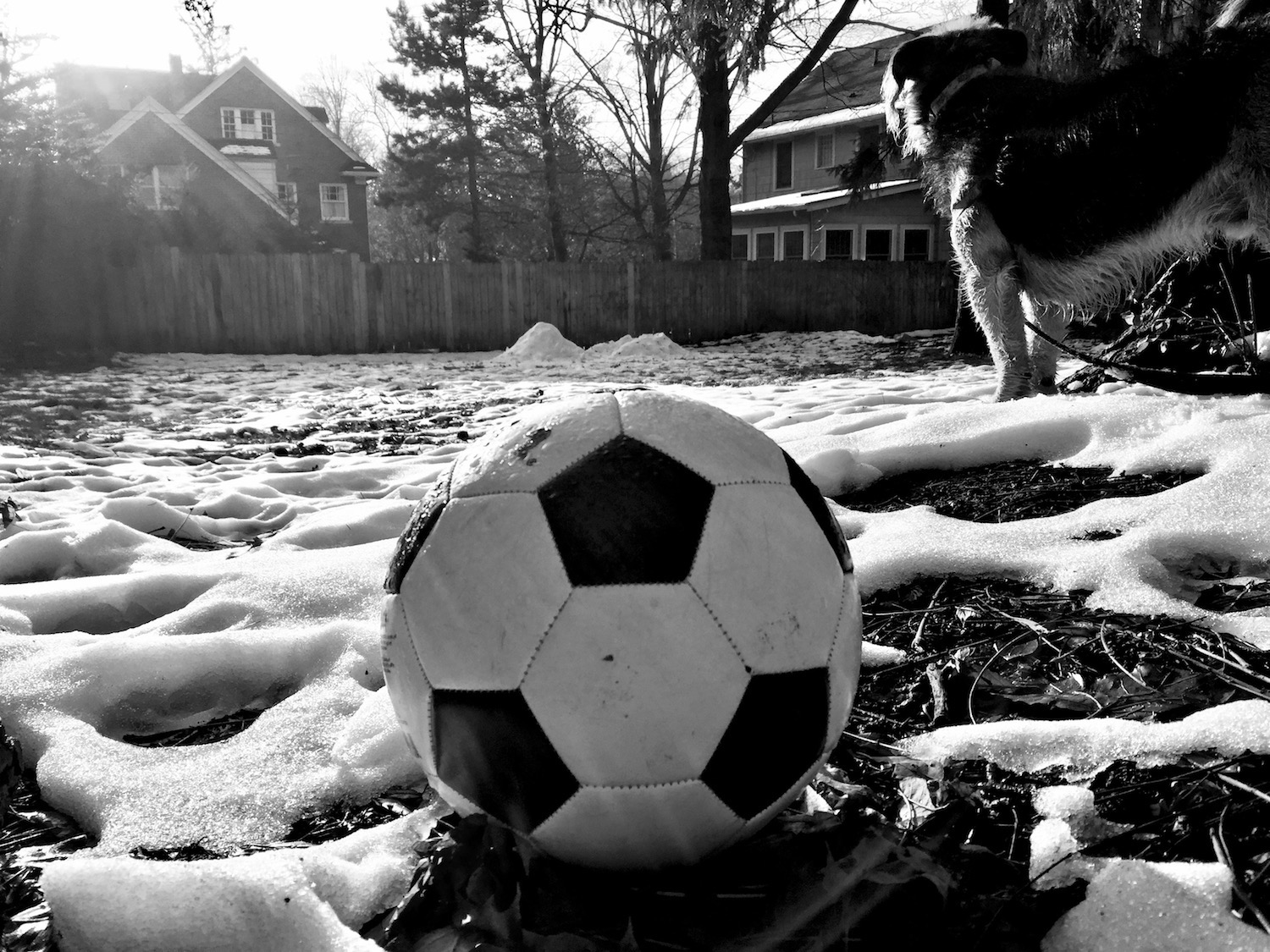 soccer_ball_dog_bandw.jpg
