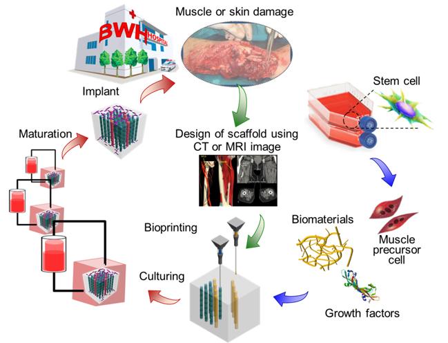 Manufacturing biomimetic scaffolds.jpg