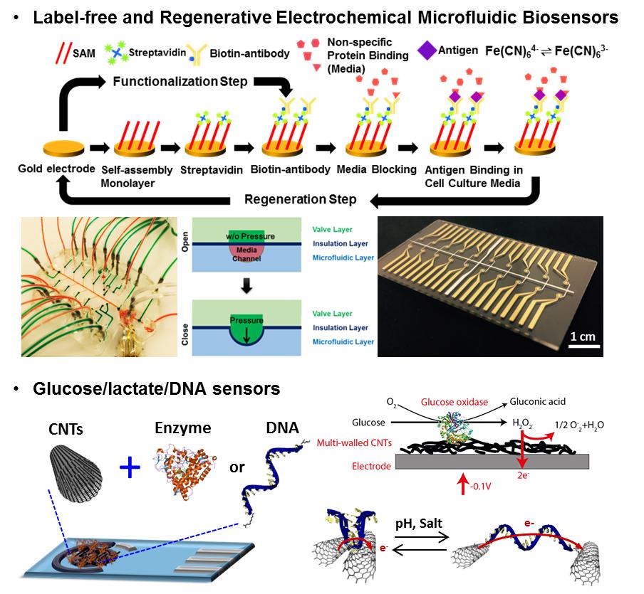 Biosensor and Flexible elecronics.jpg