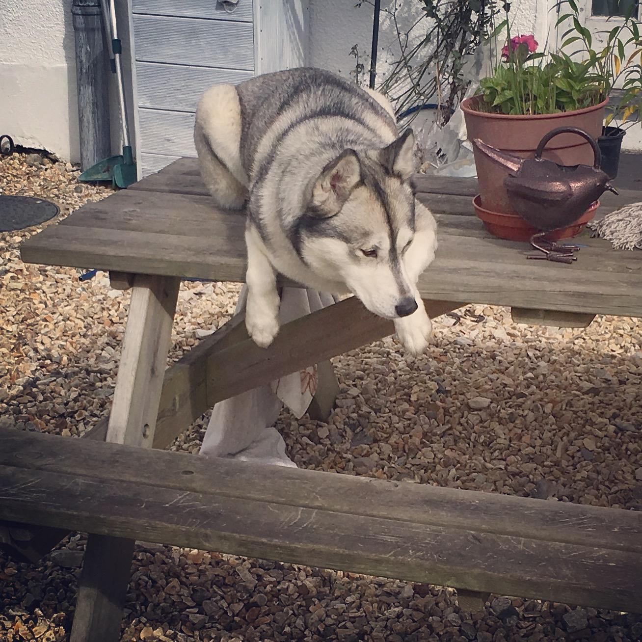 Hiya!welcome to Lisa's dog grooming salon -