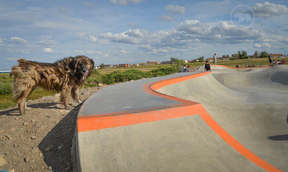 Res Dog at Thunder Park