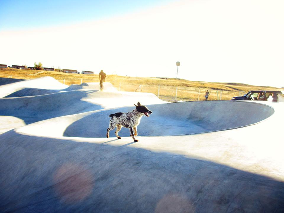Noot the Dog checks out the Thunder Park