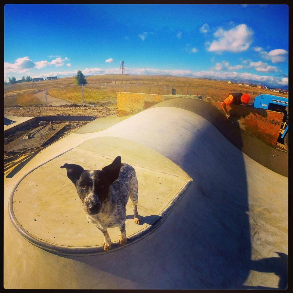 The boss Noot the dog on the pump bump jump